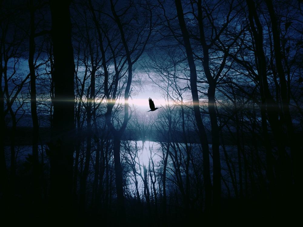bird-383245_1920