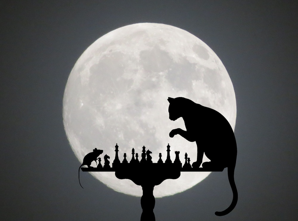 cat-1218093.jpg