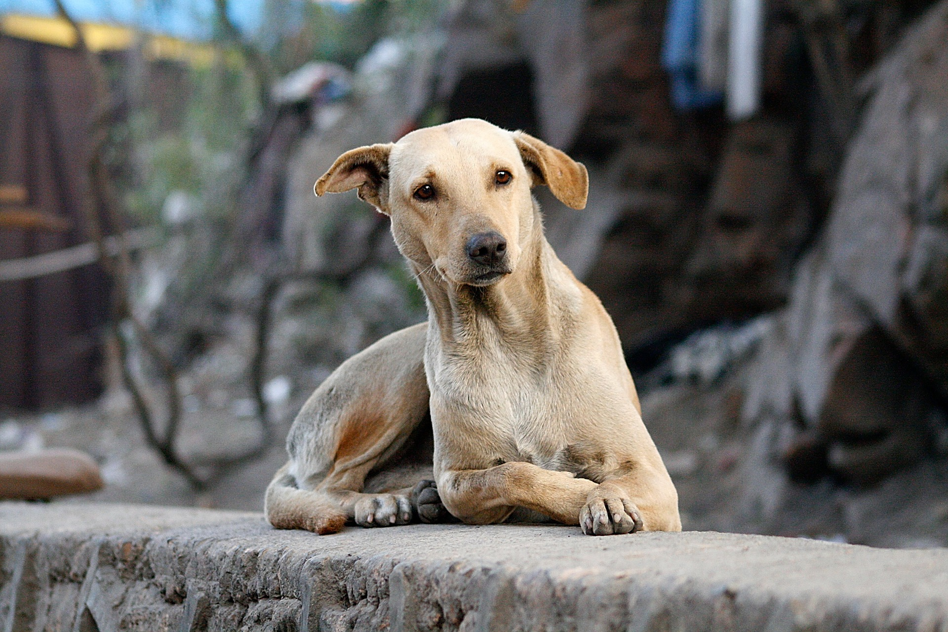 dog-1037972_1920