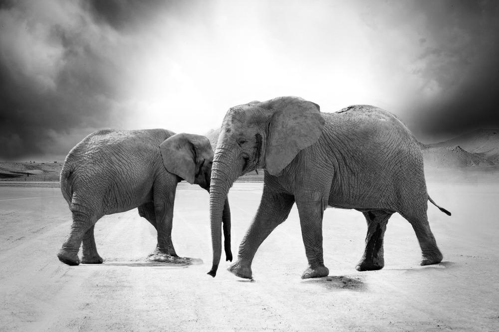 elephant-970456_1920