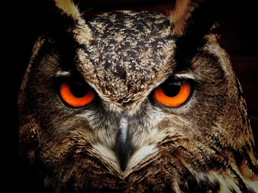 owl-50267