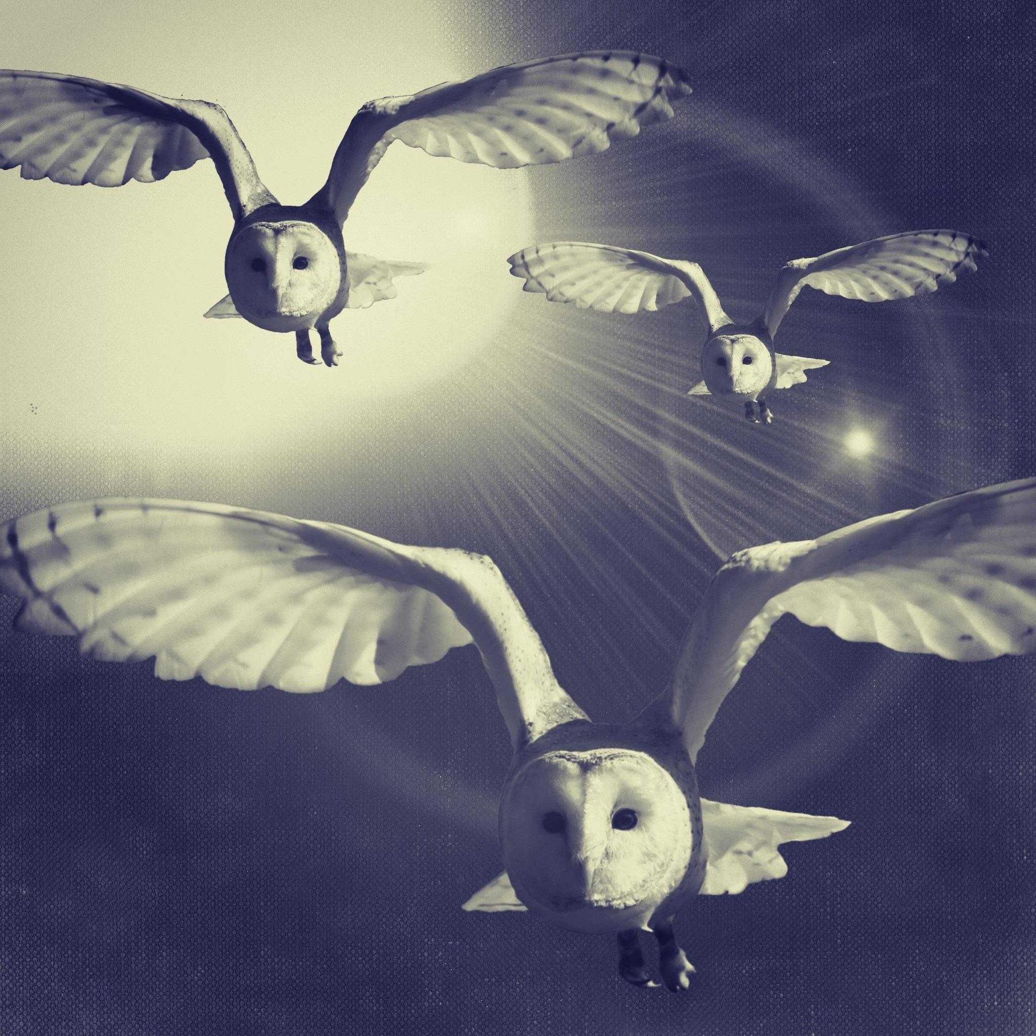 owls-1117168