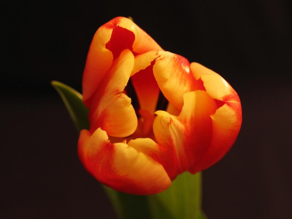 plant-1122031