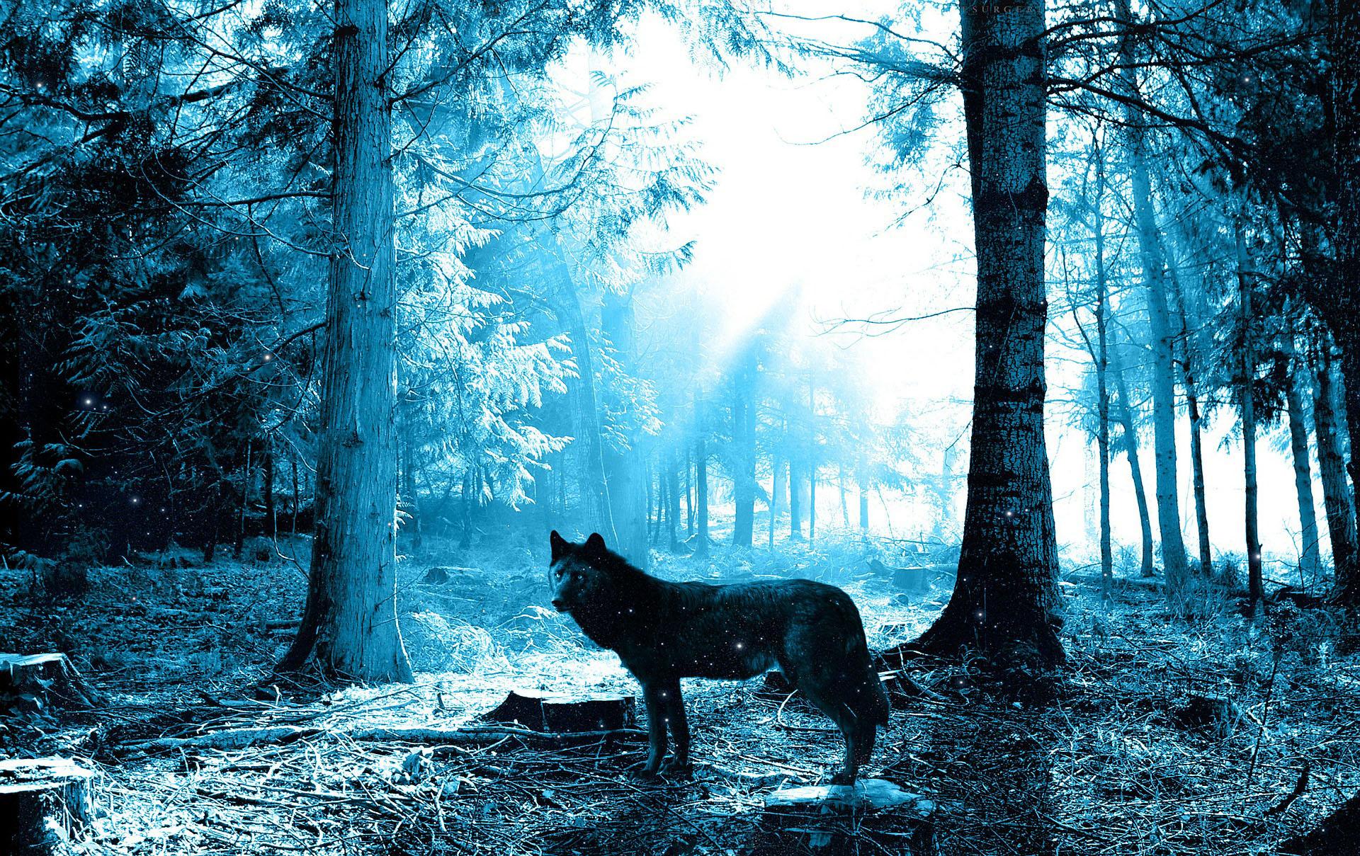 wolf-243927_1920