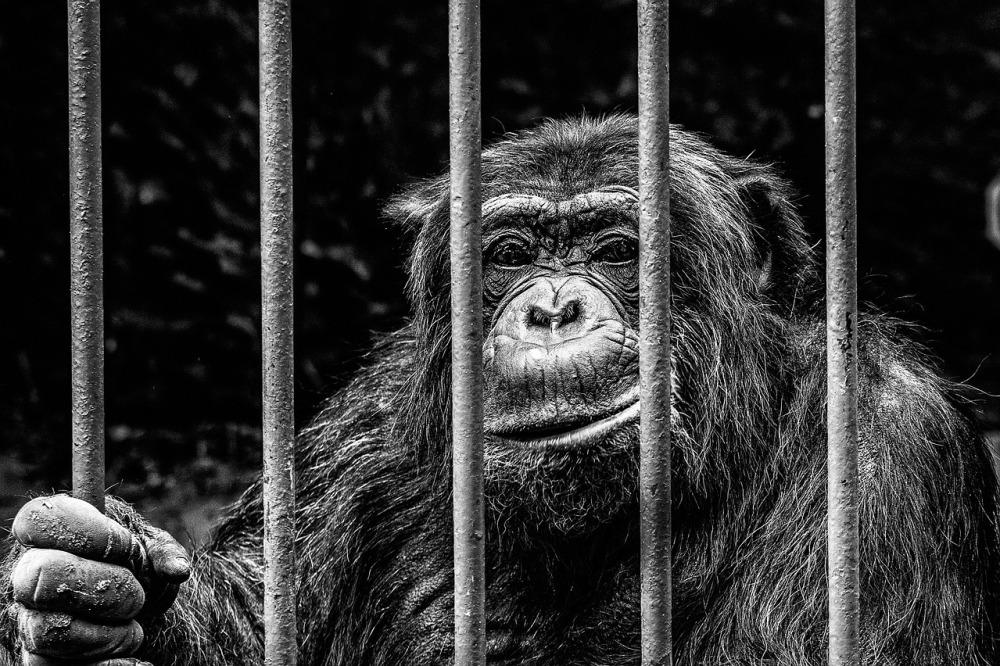 monkey-256420_1280